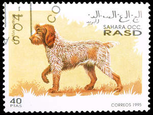 A Korthals Griffon stamp from RASD