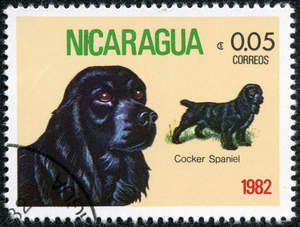 A Cocker Spaniel on a Central American stamp