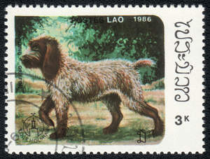 A Korthals Griffon stamp from Laos