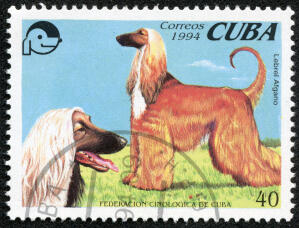 An Afghan Hound on a Cuban stamp