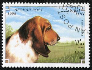 A Basset Hound on an Afghan stamp