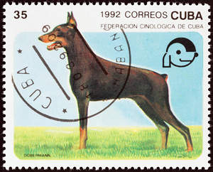 A Doberman Pinscher on a Cuban stamp