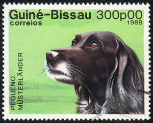 A Small Munsterlander on a West African stamp