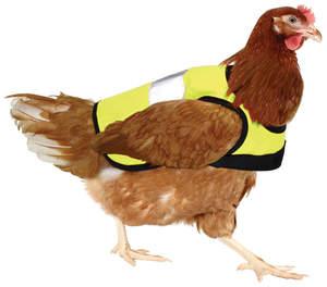 Warnweste für Hühner - Gelb