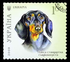 A Dachshund on a Ukrainian stamp