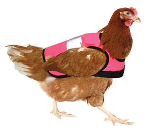 Pink High-Vis Chicken Jacket