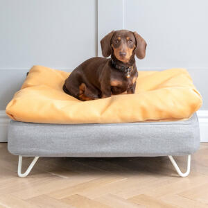 Topology Dog Bed with Bean Bag Topper and White Metal Hairpin Feet - Small