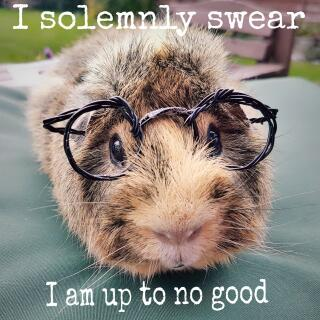 Piggy Potter!
