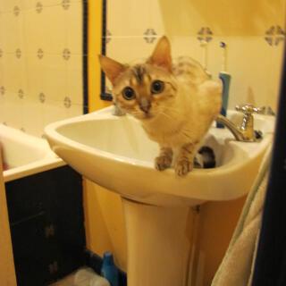 I like basins