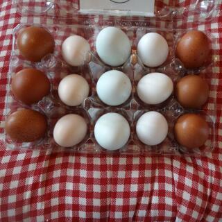 my egg range ♡♡♡