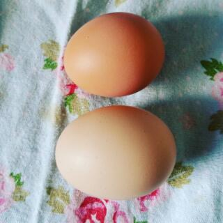 Two eggs today!!