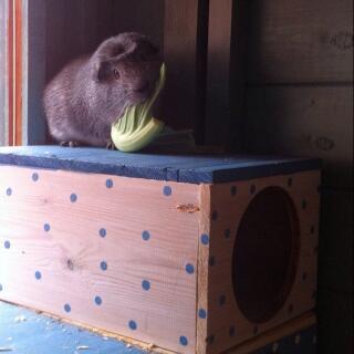 Harvey loves he's green foods