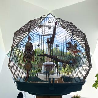 Geodaesic birdcage in a geodaesic house ...