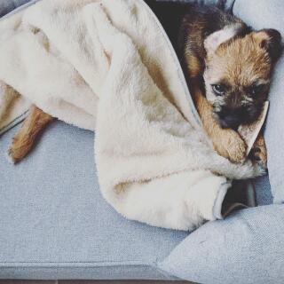 Walter loving his soft & cosy blanket