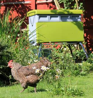 Beehaus with garden hens