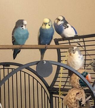Bonnie, Clive, Blacktail and Blondie