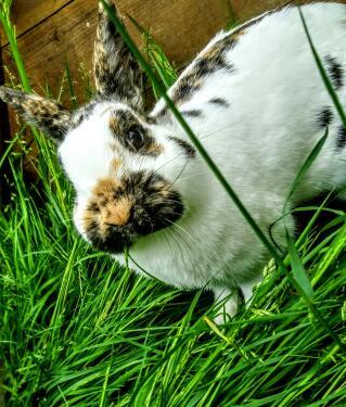 Sniffles, my rabbit!