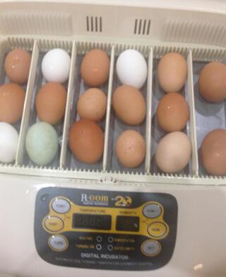 Our incubator