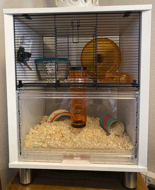 Bear's fabulous new home