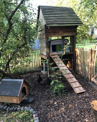 Unser Hühnerstall, eingefügt in das alte Spielhaus der Kinder