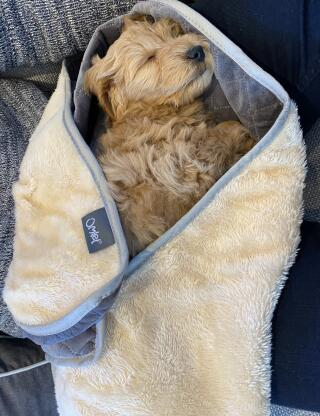 """""""Perfect for the car ride home"""" - Finn, 8 weeks"""