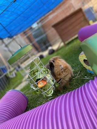 Cleo enjoying her feeder!