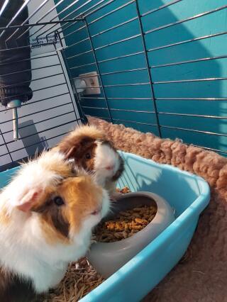 Sven et Olaf