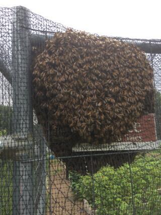 A swarm