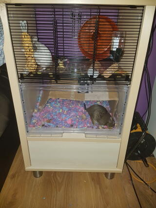 My autistic sons degu's love this cage.
