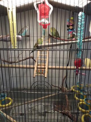 Chippy, Kiwi, Peanut in toyland