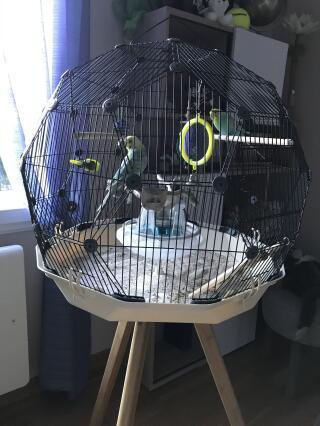 Cage achetée en avril 2020 pour mes deux perruches ... ravies