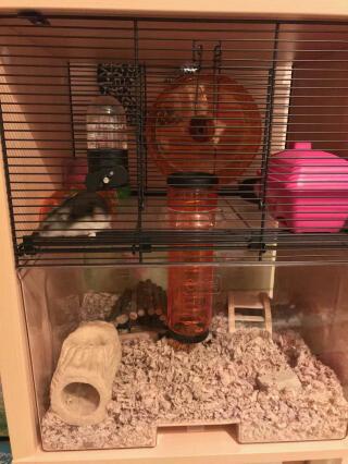 Notre jolie cage