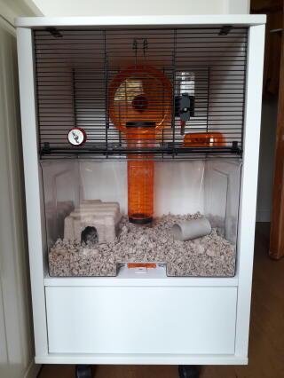 Mon hamster Oréo