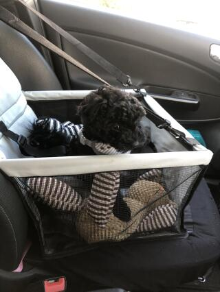 My first outing in my car cradle