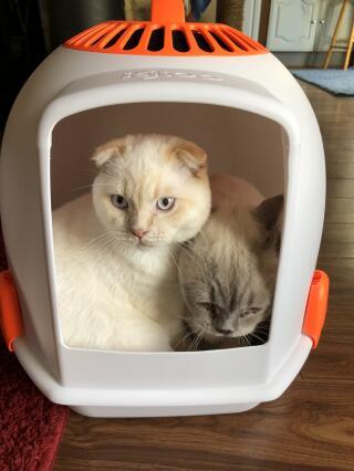 Best cat litter tray