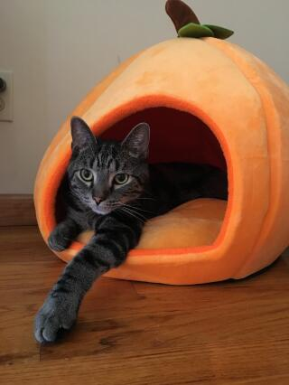 """Pumpkin - check,  great i'm ready for Halloween"""