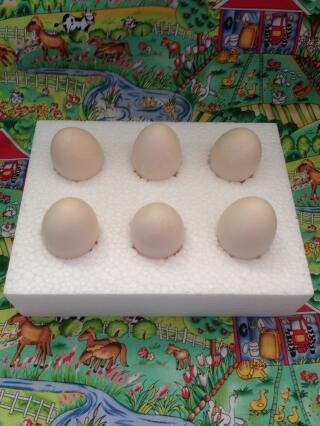Special boxes for sending fertile eggs