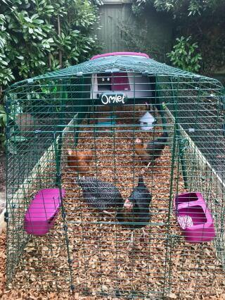 The Eglu Cube - the perfect Coop for my Chickens!