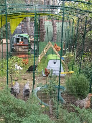 el nuevo patio