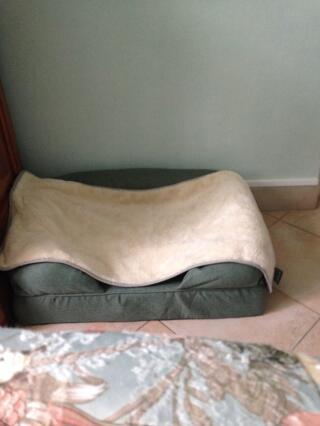 Petit lit bien agréable pour ma petite chienne qui l'apprécie beaucoup.