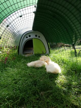 Bien à l'abri sous la bâche de protection Omlet.