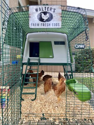 Omlet chicken coop