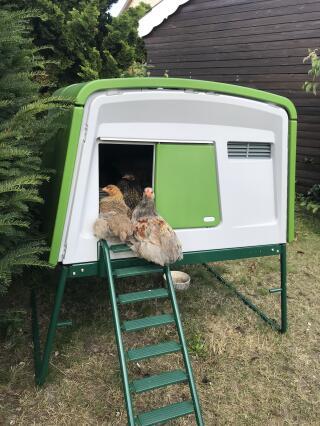 Unsere Hühner finden auch die Leiter ganz bequem ;)