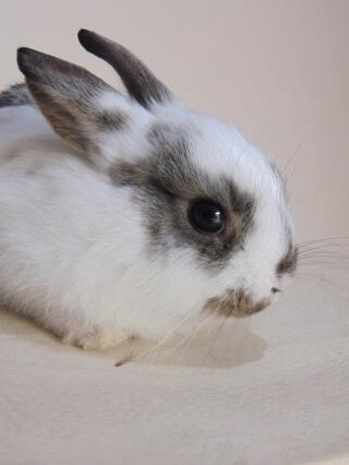 Totoro - I believe he's an English rabbit.