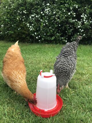 Eton poultry drinker