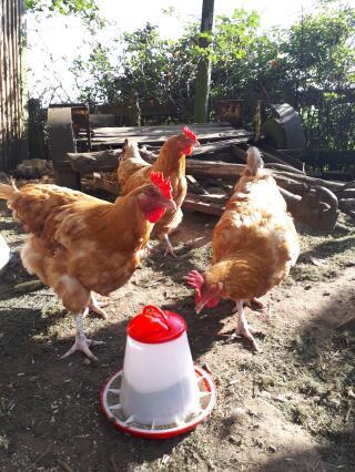 The girls enjoying their new feeder