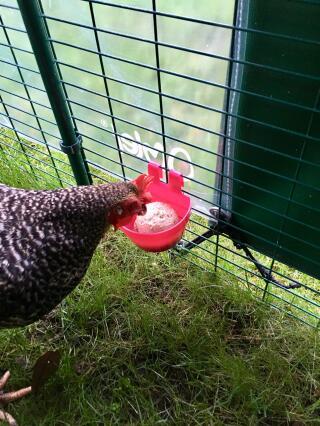 My girls LOVE these Chicken Pecker Balls