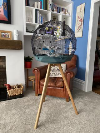 Absolutely thrilled with the cage and stand - Norman is the happiest Budgie in the world!!!