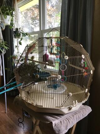Budgies new home