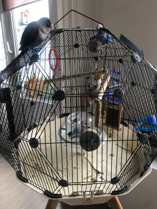 De vogel is er blij mee... zowel erop als erin:-)
